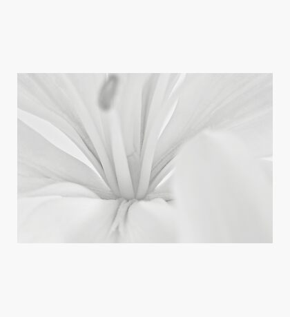 Lily Stamen Macro  Photographic Print