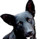 Chernysh, the Stadium Dog by Nikolay Semyonov