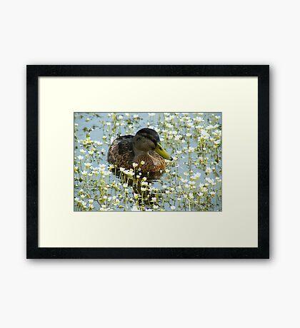 Flower Duck Framed Print