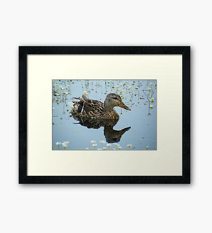 Duck Reflection Framed Print