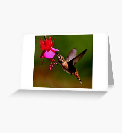 HUMMER IN FLIGHT.....SOLD ART Greeting Card