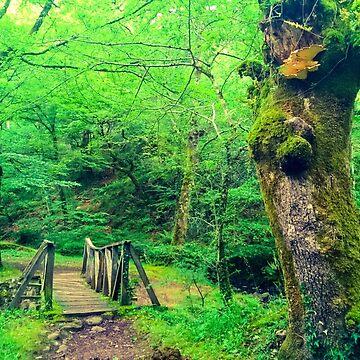 Bridge in the forest de diegopc5
