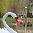 Boston Public Garden Swan Boats by Michelle Callahan