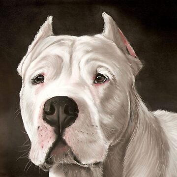 Dogo Argentino by art-of-dreams