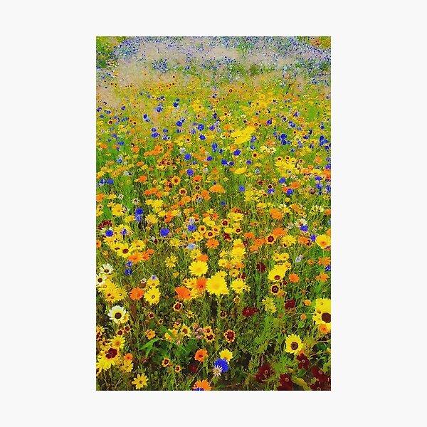 Field of flowers by Gustav Klimt Photographic Print