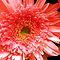 *Avatar/Closeup - Gorgeous flower Cards*