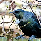 Don't Look At Me - Tui - NZ by AndreaEL