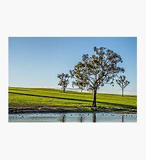 A tree scene Photographic Print