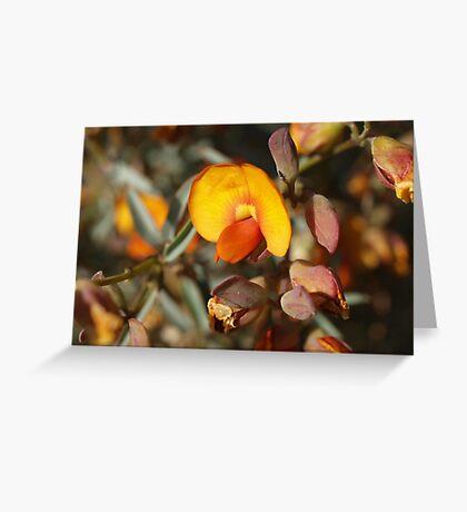 Gastrolobium velutinum Greeting Card