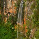 Purling Brook Falls in Springbrook by Michael Matthews