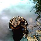 Frog enjoying summer sun by Brad Robinson