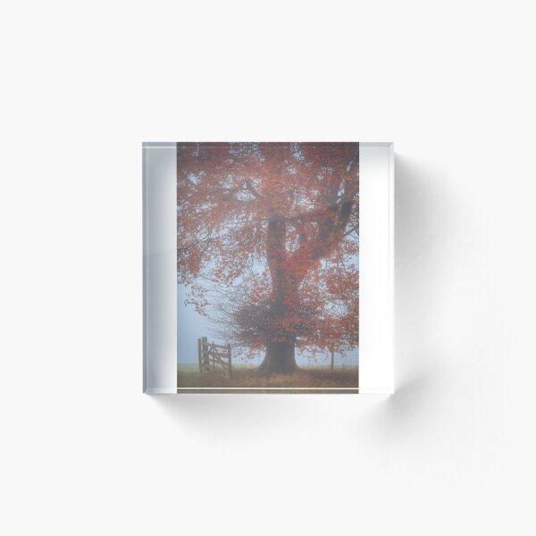 Beech tree by an open gate in the autumn mist Acrylic Block