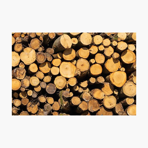 Wooden logs Photographic Print