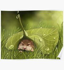 Sleeping in the rain Poster