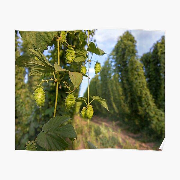 Hops on the Vine Poster