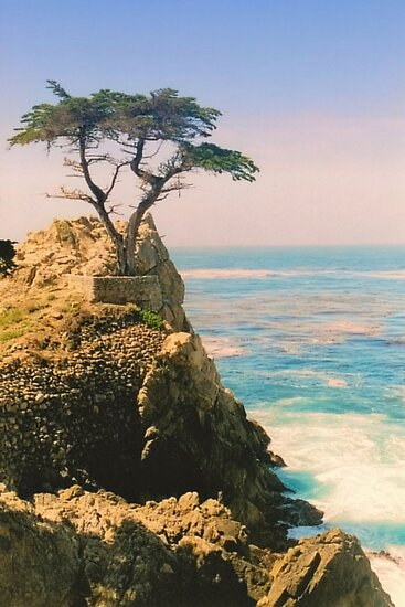 The Lone Cypress by DJ Florek