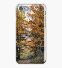 Autumn dirt road larch forest iPhone Case/Skin