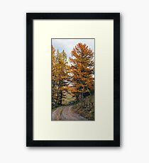 Autumn dirt road larch forest Framed Print