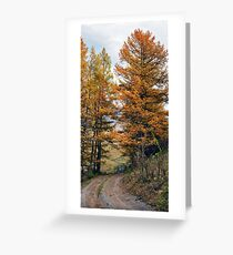 Autumn dirt road larch forest Greeting Card