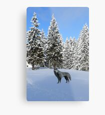 A wolf in the snow. Metal Print