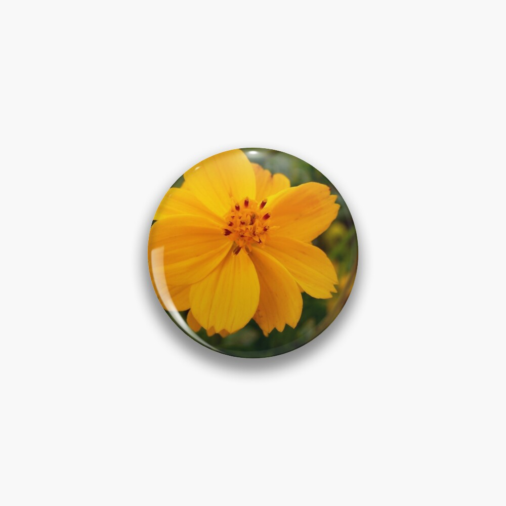 Golden Coreopsis Pin