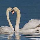 Swan Love by M S Photography/Art