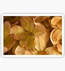 Hydrangea Petals - Macro  Sticker