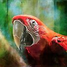 Green Winged Macaw by Lois  Bryan