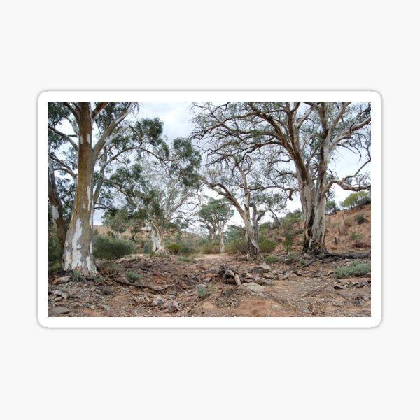 Majestic River Redgums - Flinders Ranges Sticker
