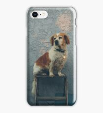 The Shaggy Dog iPhone Case/Skin