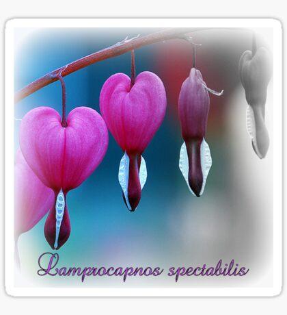 Lamprocapnos spectabilis Sticker