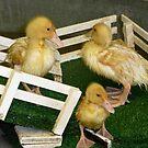 Diving Ducks by WildestArt