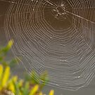 Large Spiderweb! by SherryLynn58
