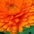 Orange... by Eugenio
