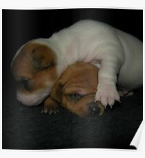 ADORABLE BABY PUPPIES Poster