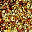 Autumn Leaves by Alberto  DeJesus