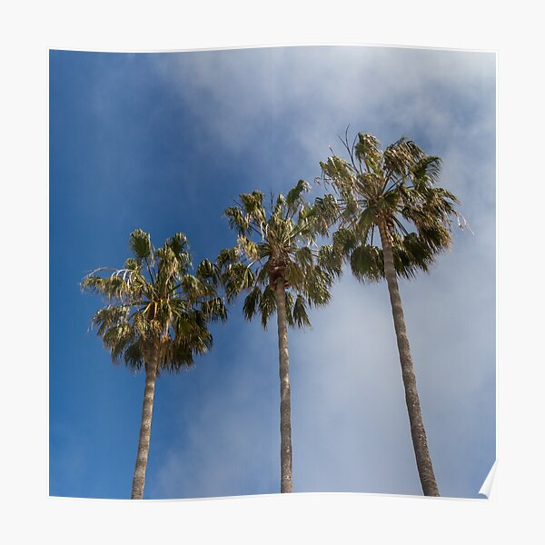 Three Palms Color Poster