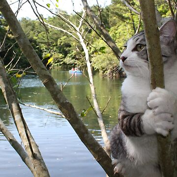 Cat grab by NYANKICHILABO