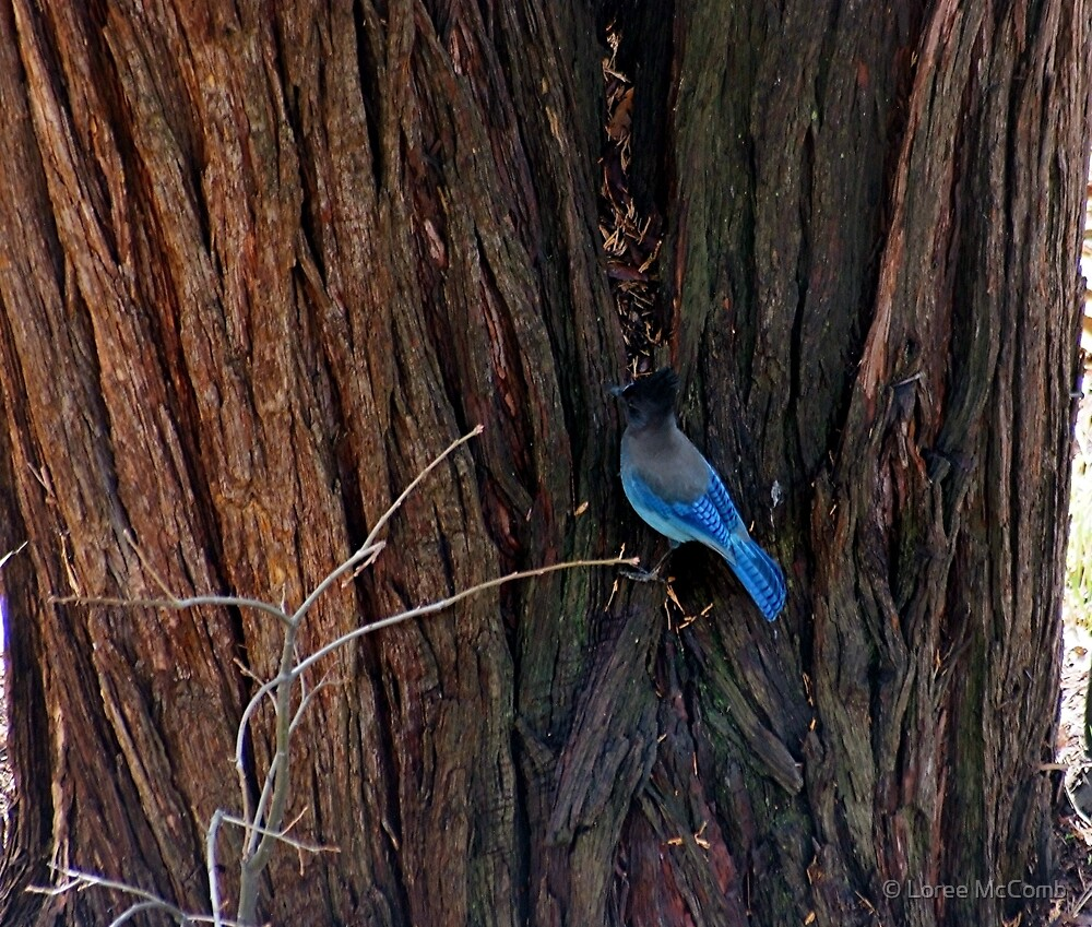 Blue Bird of Happiness by © Loree McComb