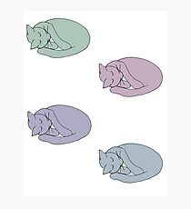 Sleeping Cat Photographic Print