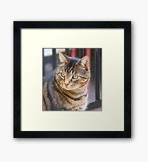 Jimmy, My Cat, Australia. Framed Print