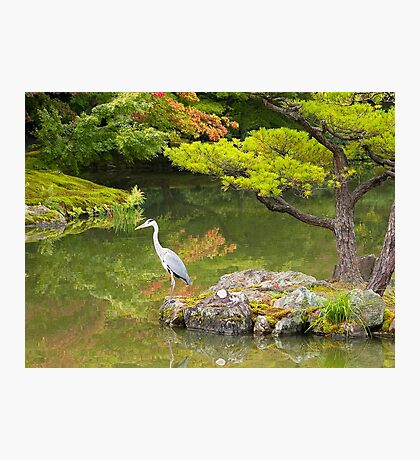 Heron at the Golden Pavilion, Kyoto. Photographic Print