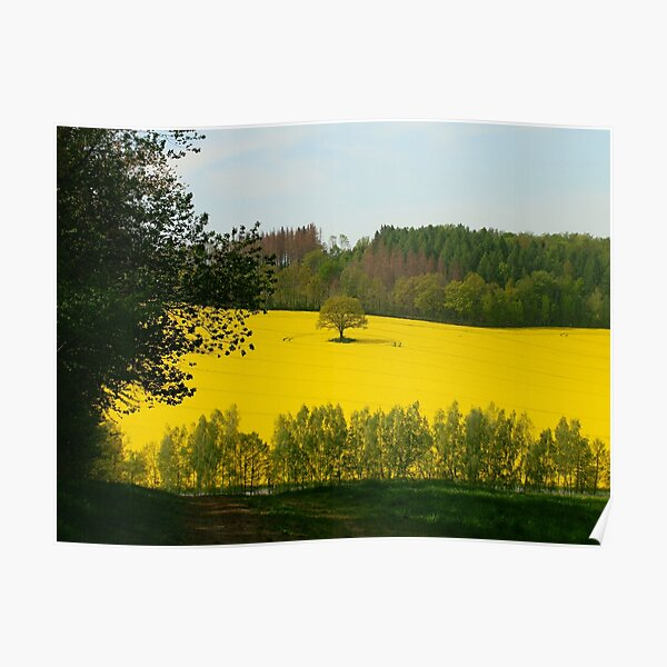 Rapeseed field in spring Poster