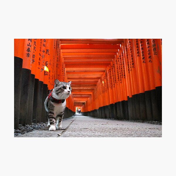 Cat to walk the Fushimi Inari Photographic Print