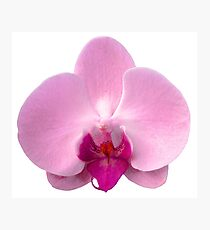 Orchid, Dorne Phalaenopsis in Light Pink Photographic Print