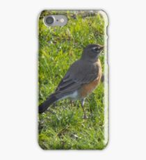 American Robin back from winter vacation iPhone Case/Skin