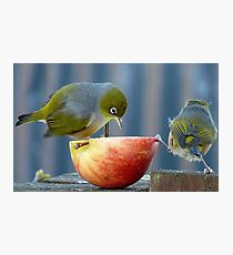 Holding the Apple Up! - Wax Eye NZ - Southland Photographic Print
