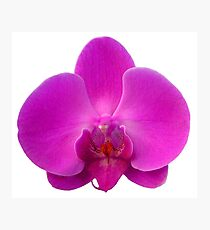 Orchid, Dorne Phalaenopsis Photographic Print