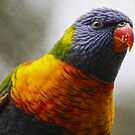 Colourful Character  by Kathryn Potempski