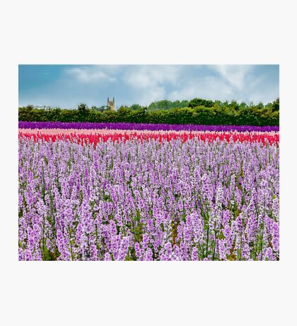 The Confetti Fields of England.  Photographic Print